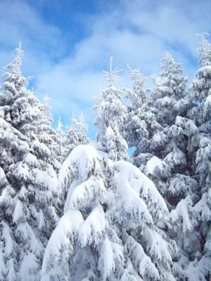 im winter zella mehlis ski oberhof langlauf th ringer wald. Black Bedroom Furniture Sets. Home Design Ideas